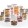 Питательные подложки для микробиологии Sartorius