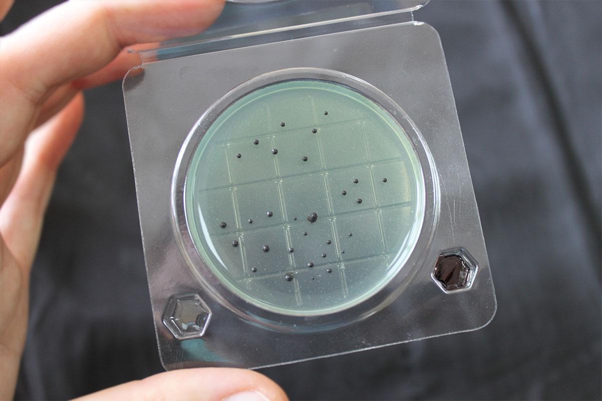 препарат от паразитов широкого спектра